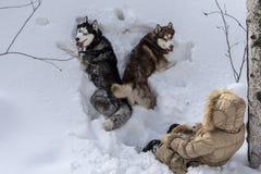 Due cani che si trovano nella neve profonda con una ragazza Vista superiore, animali domestici con l'assistente di volo che cammi fotografia stock libera da diritti