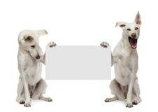 Due cani dell'incrocio che si siedono e che tengono Fotografie Stock