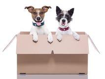 Due cani della posta Fotografia Stock