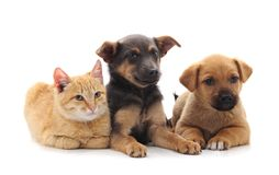 Due cani e un gatto immagini stock