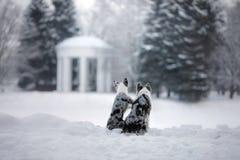 Due cani insieme, amicizia sulla natura nell'inverno fotografia stock libera da diritti