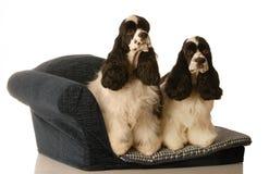 Due cani su una base del doggy fotografia stock libera da diritti