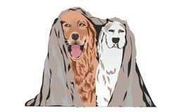 Due cani su una priorità bassa bianca Fotografia Stock Libera da Diritti