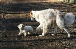 Due cani in un parc Immagine Stock