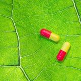 Due capsule colorate su una foglia verde Concetto di medicina organica fotografie stock