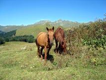 Due cavalli Fotografia Stock
