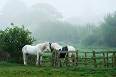 Due cavalli attraverso una rete fissa Fotografia Stock Libera da Diritti
