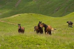 Due cavalli che baciano nel prato fra le montagne fotografie stock libere da diritti