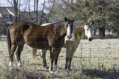 Due cavalli che stanno al fenceline fotografie stock