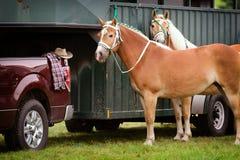 Due cavalli della concorrenza accanto ad un rimorchio del cavallo Immagini Stock