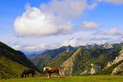 Due cavalli nei pascoli della montagna Fotografia Stock