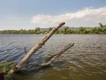 Due ceppi di legno che attaccano fuori l'acquadel ofvicino alla riva all'argento Fotografie Stock Libere da Diritti