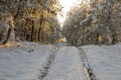 Due cervi che attraversano pista nevosa. Immagine Stock Libera da Diritti