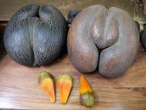 Due coco de mer - Seychelles fotografie stock