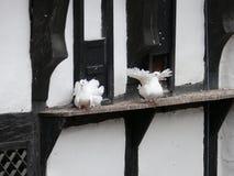 Due colombe Immagine Stock
