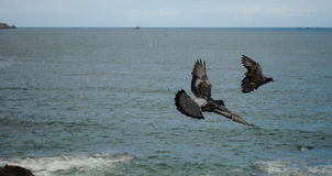 Due colombe Fotografie Stock