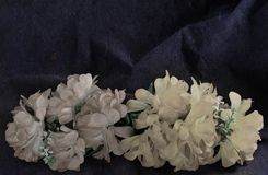 Due colori della parete sbiaditi rami Fotografia Stock