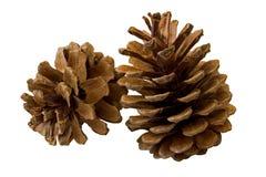 Due coni del pino isolati su bianco Fotografie Stock Libere da Diritti
