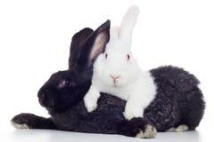 Due conigli Fotografie Stock