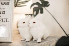 Due conigli bianchi che si siedono insieme vicino ad a vicenda sul fondo di tonalità caldo Fotografia Stock