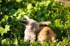 Due conigli del bambino Immagine Stock Libera da Diritti