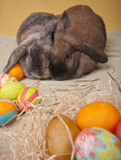 Due coniglietti di pasqua. Immagini Stock Libere da Diritti