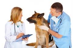 Due controllare che esaminano cane Immagini Stock Libere da Diritti