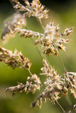 Due covered grass Royalty Free Stock Photos