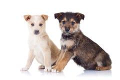 Due cuccioli esterni molto svegli immagine stock