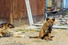 due cuccioli senza tetto sulla via Fotografia Stock