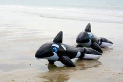 Due delfini di galleggiamento della plastica gonfiabile sulla spiaggia Fotografie Stock