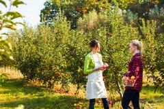 Due donne adorabili fra di melo all'azienda agricola fotografie stock libere da diritti