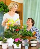 Due donne anziane che prendono cura delle piante domestiche Fotografia Stock