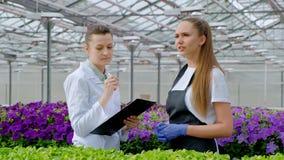Due donne in camice ed in grembiuli neri Gli scienziati, i biologi o gli agronomi esaminano ed analizzano i fiori ed il verde video d archivio