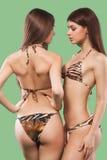 Due donne castane sexy che portano costume da bagno isolato su fondo verde Ente perfetto Concetto della pubblicità di estate del  Immagini Stock Libere da Diritti
