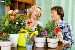 Due donne invecchiate che prendono cura delle piante decorative Fotografia Stock