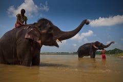 Due elefanti e cavalieri nel fiume del Nepal Immagine Stock