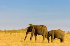 Due elefanti in Masai Mara Immagine Stock Libera da Diritti