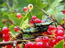 Due insetti Fotografia Stock Libera da Diritti