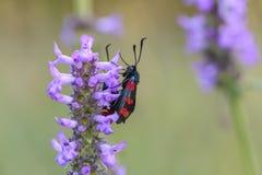Due farfalle si siedono sul fiore Fotografie Stock Libere da Diritti