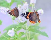 Due farfalle si siedono sulle foglie del fiore del campo, macro Immagine Stock Libera da Diritti