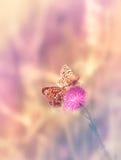 Due farfalle sul fiore Immagini Stock