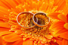 Due fedi nuziali dell'oro su una gerbera arancio Immagine Stock