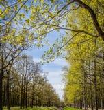 Due file degli alberi da parte un fiume immagine stock