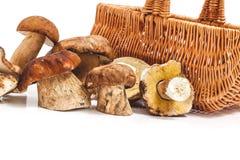 Due file dei funghi freschi si sono riunite davanti al canestro Immagine Stock