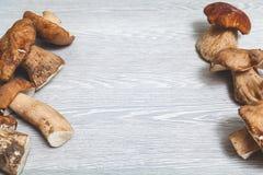 Due file dei funghi sui bordi della superficie grigia Immagine Stock Libera da Diritti