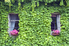 Due finestre Fotografia Stock Libera da Diritti