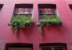 Due finestre decorate con i vasi da fiori Fotografie Stock