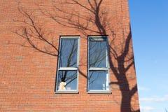 Due finestre su una costruzione moderna con l'ombra di un albero Fotografia Stock