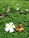 Due fiori Fotografie Stock Libere da Diritti